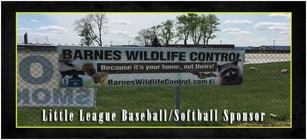 barnes wildlife control is a little league sponsor