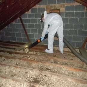 Technician Removing Bat Guano from Attic in Oakwood Ohio