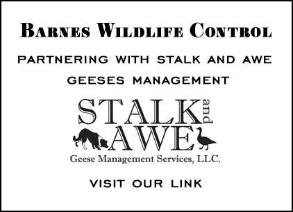 stalk-and-awe partnering with barnes wildlife removal