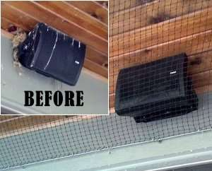 After Bird Removal & Netting Installation