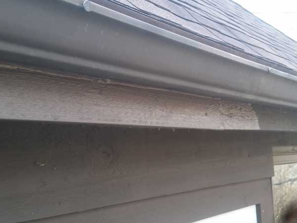 Animal damage repairs and wildlife exclusion service for siding damage done by wildlife made the client very happy.