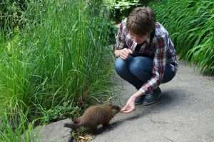 Don't feed baby groundhogs even though they can be cute.