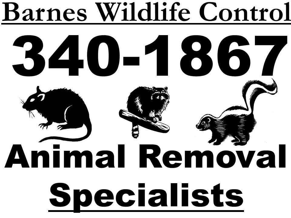 barns dayton barnes services attic control complete cincinnati wildlife removal