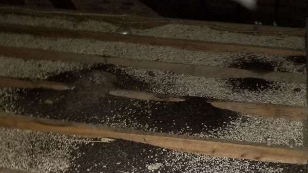 barnes wildlife control removes bat guano from attics