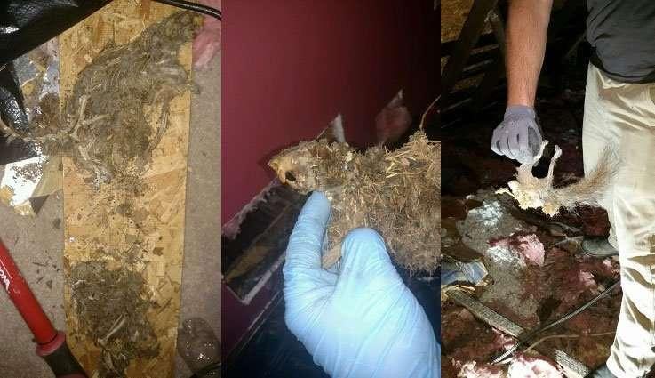 Odor Control Sanitation Services Dead Animal Removal