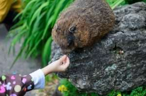 Don't feed groundhogs if you want your plants and garden.