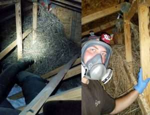 Gigantic Bird's Nest Removed & Sanitized from Troy, OH Attic