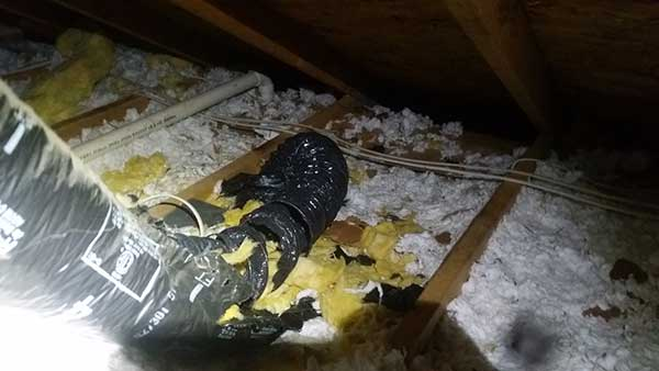 Barnes Wildlife Control are experts at insulation replacement