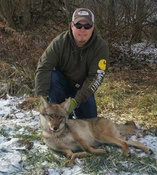 Barnes Wildlife Control's  knowledgeable staff  is trained in coyote removal and fox trapping.