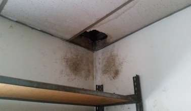 Raccoons were coming out of drop ceiling into office and had to be removed Kettering, Ohio