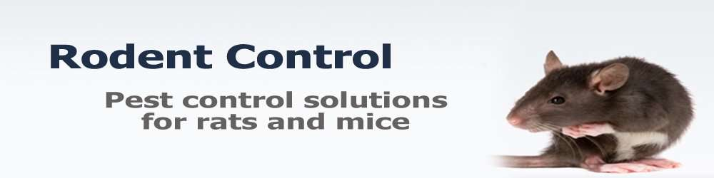 Sidney Ohio Rodent Removal Barnes Wildlife Control