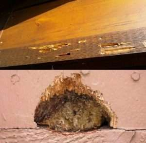 Woodpecker hole in wood siding Centerville Ohio, and Woodpecker Damage to a Bellbrook home.