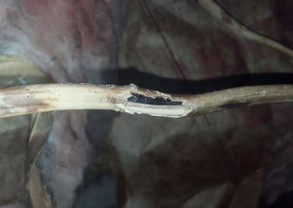During our Rodent Pest Control Service Inspection we often find chewed wires in the attic from mice and squirrels. We are the rodent removal experts!
