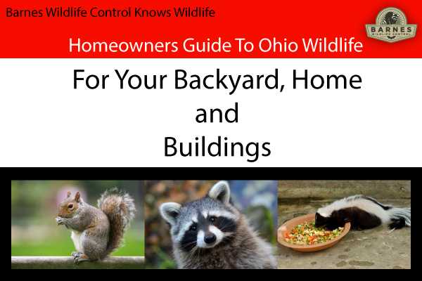 Dayton Wildlife Pest Control – Homeowner Guide to Wildlife Around the House