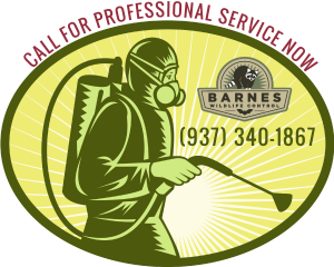 Call Barnes Wildlife Control's Stink Bug Removal Service