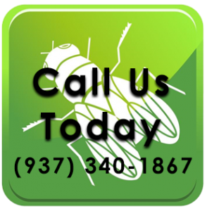 Click to call Barnes Wildlife's Fly Removal Service today!