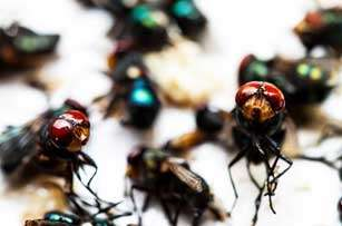 Barnes Wildlife Control Fly Removal Service colorful-flies