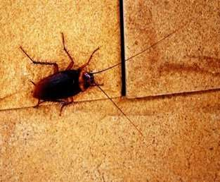 "Admitting that your house or apartment has roaches is like pinning a scarlet ""R"" on your chest for all to see."