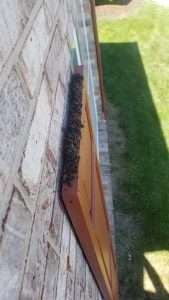 Bat Guano Buildup on Top of a Door in Dayton, Ohio-professional bat removal