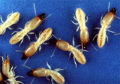 Insect Attacked Ohio Home but Barnes Wildlife Control Came To The Rescue