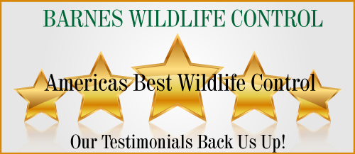 Americas Best Wildlife Control