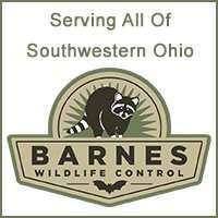 Americas Best Wildlife Control Company