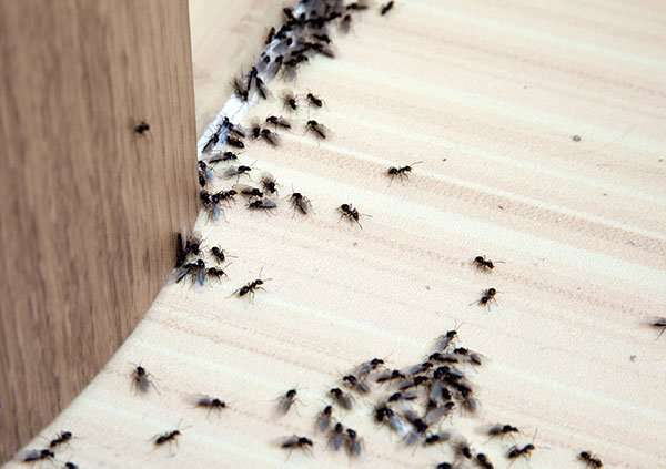 Having ants outside usually doesn't bother people. But, when people see them trailing along my kitchen floors or countertops they get upset.