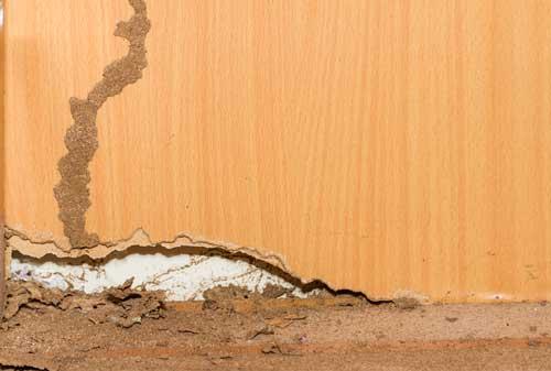 termites-500-B