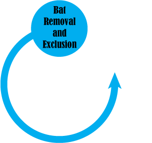 bat removal pro serving the entire united states for bat removal
