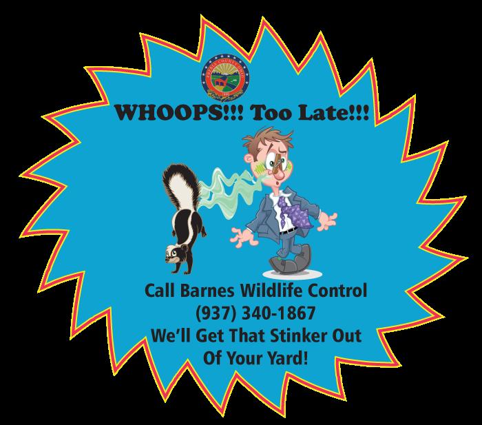 Preble County Animal Pest Removal Service - Barnes Wildlife