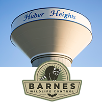 Huber Heights Wildlife Solutions