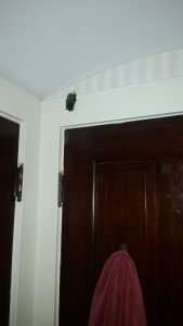 There is a Bat in my House Montgomery County Ohio