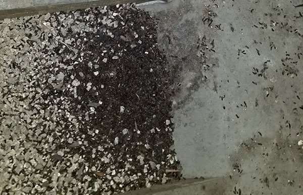 Bat guano found in a Marysville, Ohio attic image