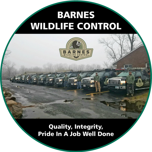 Barnes Wildlife Control certified and knowledgeable team provides safe and efficient animal & insect removal services.