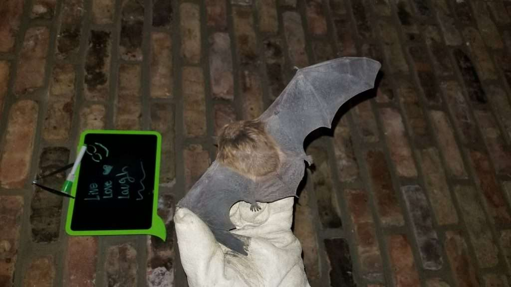 Bat Caught inside this Miami Valley Home