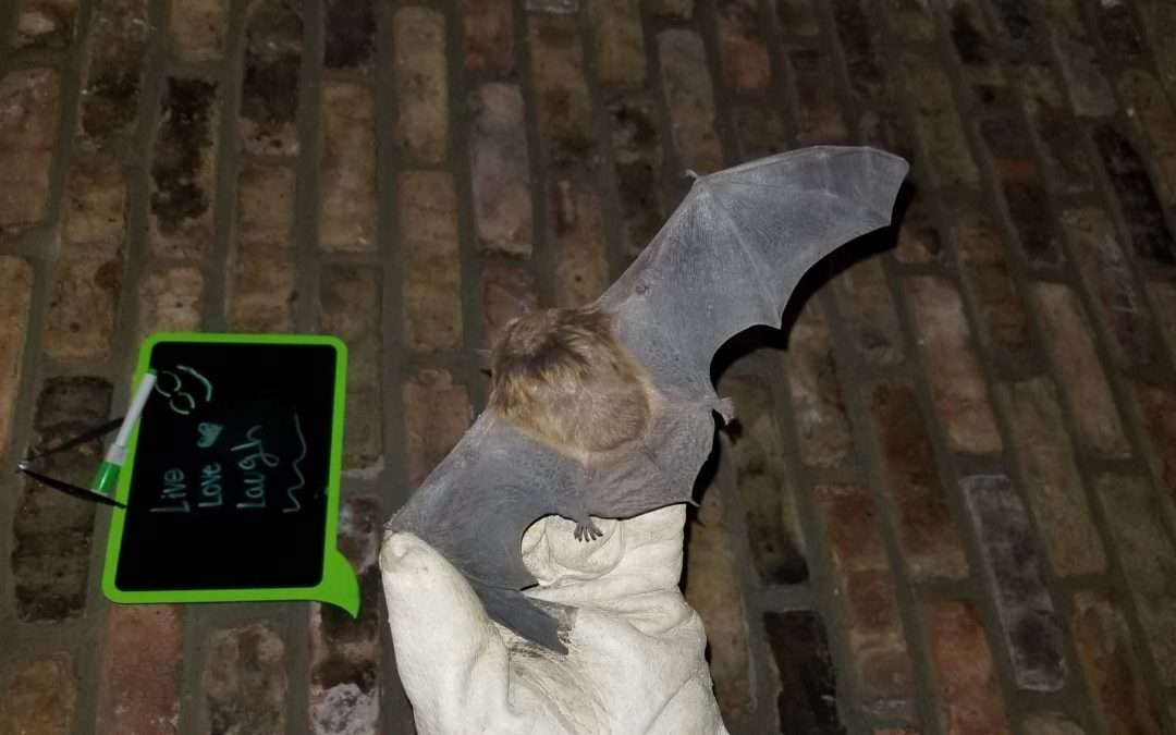 Getting Rid of a Bat in the House