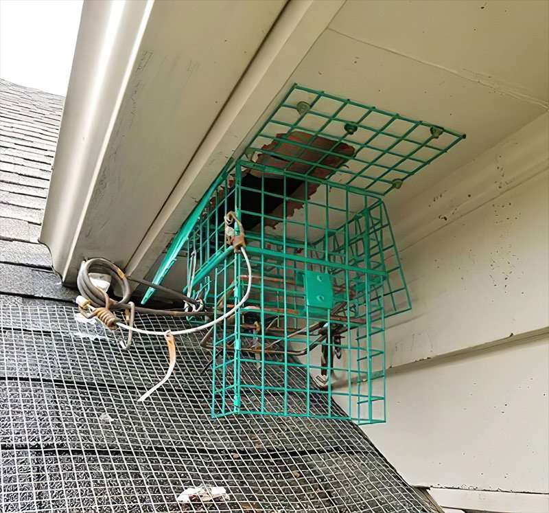 DAYTON ANIMAL PEST REMOVAL photo of the green hornet trap
