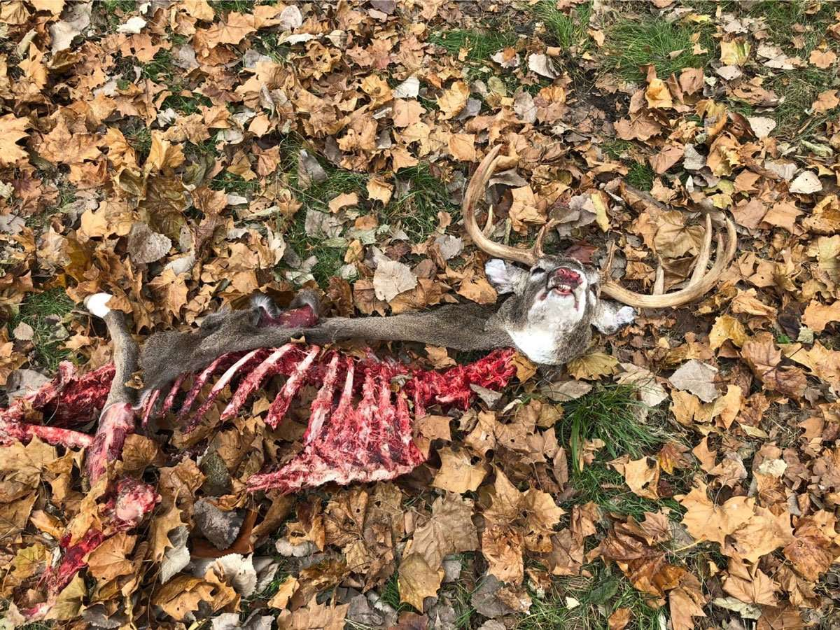 Deer Carcass Pickup And Disposal