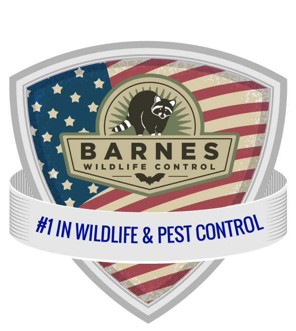 Montgomery County Ohio Raccoon Removal logo in header