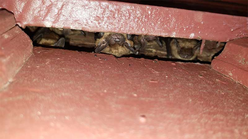 Photo of a colony of bats living inside this bricked in area.