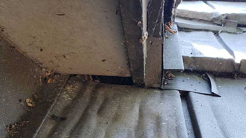Photo of the last opening that bats were using to enter an Indian Lake attic.