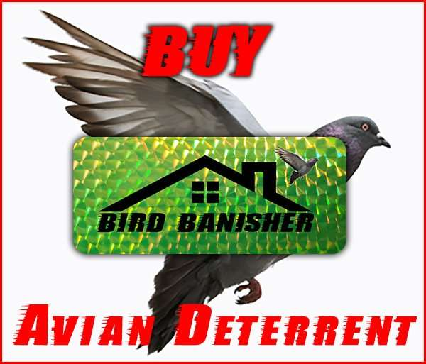 dayton animal pest removal graphic for The Bird Banisher