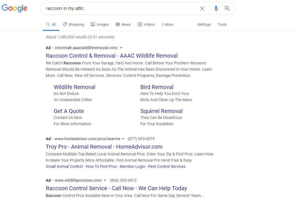 adwords for raccoon in my attic search photo
