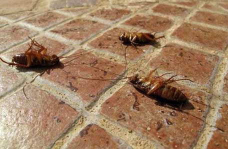 Barnes Wildlife Control Cockroach Removal Service In Greater Dayon Ohio
